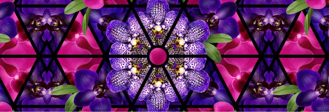 New York a febbraio Orchid Show